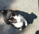 My BFF Cat